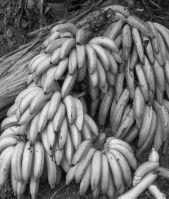 Bananas! Equador