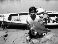 Piranha- Amazon Jungle, Peru